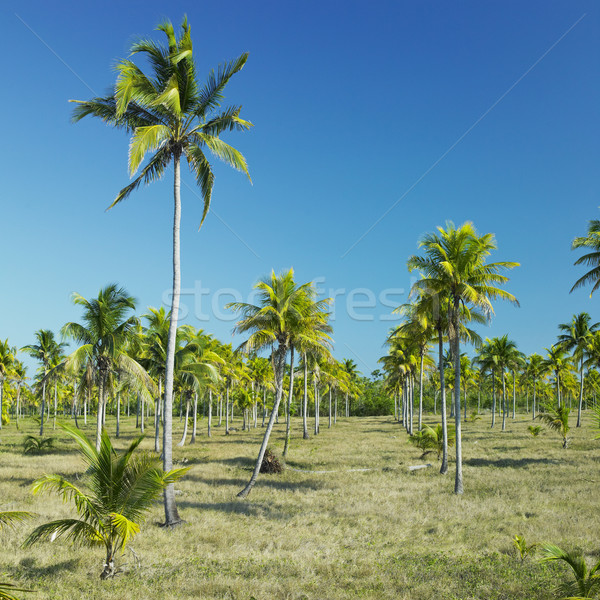 Parque Nacional Desembarco del Granma, Granma Province, Cuba Stock photo © phbcz
