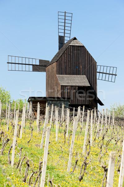 wooden windmill with vineyard, Klobouky u Brna, Czech Republic Stock photo © phbcz