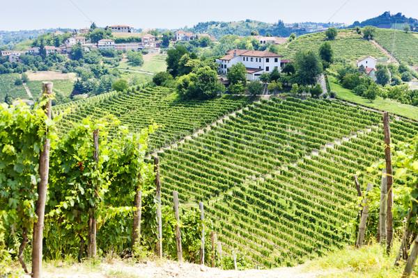 vineyar near Tana, Asti Region, Piedmont, Italy Stock photo © phbcz