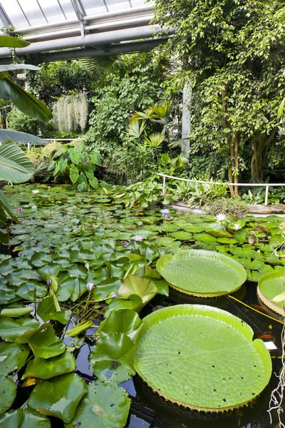 Giardino botanico Praga Repubblica Ceca foglia verde impianto Foto d'archivio © phbcz