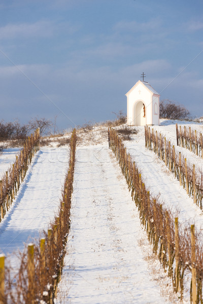 Stock photo: winter vineyard near Hnanice, Southern Moravia, Czech Republic