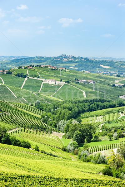 Stockfoto: Italië · reizen · Europa · wijnstok · landbouw · natuurlijke