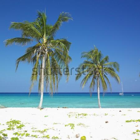 La spiaggia Cuba mare estate Palm Foto d'archivio © phbcz