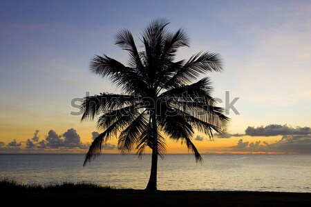 Wygaśnięcia Karaibów morza Barbados drzewo krajobraz Zdjęcia stock © phbcz