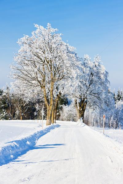 Foto stock: Montanhas · inverno · República · Checa · árvore · floresta · neve