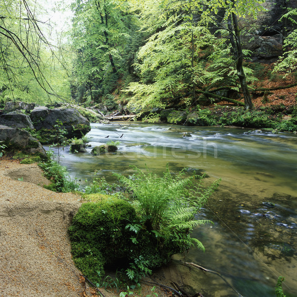Kamenice river, Ceskosaske Svycarsko, Czech Republic Stock photo © phbcz