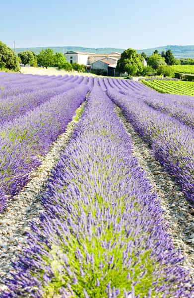 Lavendel veld afdeling Frankrijk bloem veld planten Stockfoto © phbcz