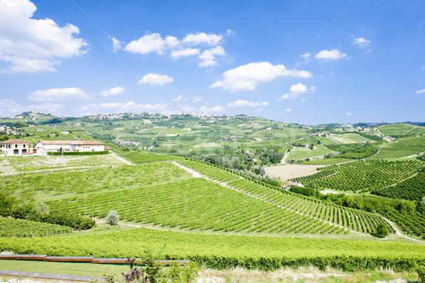 vineyars near Grinzane Cavour, Piedmont, Italy Stock photo © phbcz
