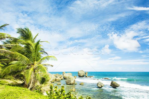 Kust Barbados caribbean boom landschap zee Stockfoto © phbcz