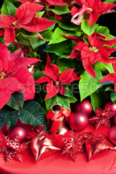 Christmas still life with Poinsettia Stock photo © phbcz