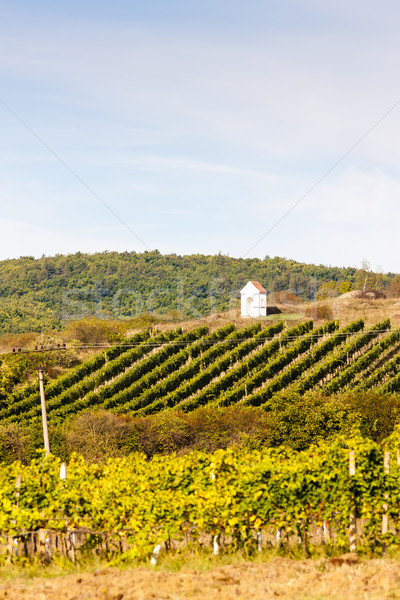 God's torture near Hnanice with autumnal vineyard, Southern Mor Stock photo © phbcz