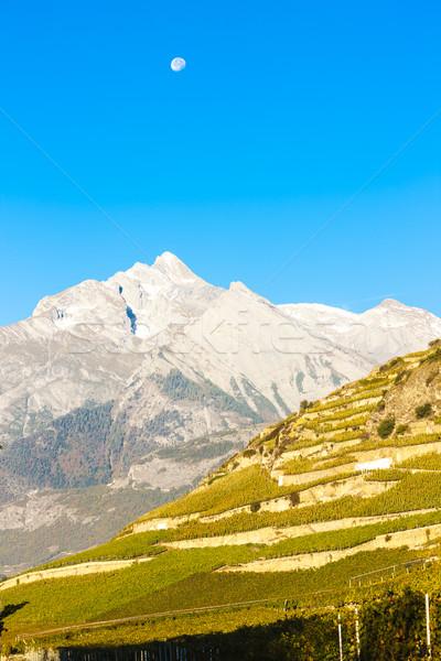 регион Швейцария природы снега путешествия винограда Сток-фото © phbcz