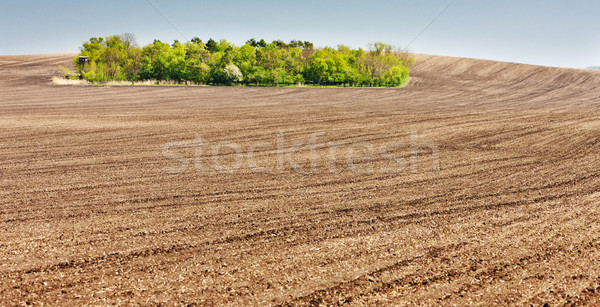 landscape with a field in Southern Moravia, Czech Republic Stock photo © phbcz