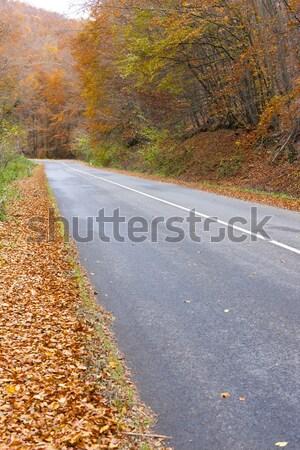 Vazio estrada outono Eslováquia europa Foto stock © phbcz