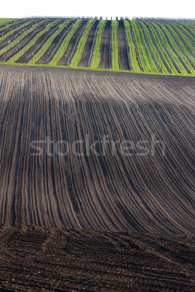 vineyards with field, Southern Moravia, Czech Republic Stock photo © phbcz