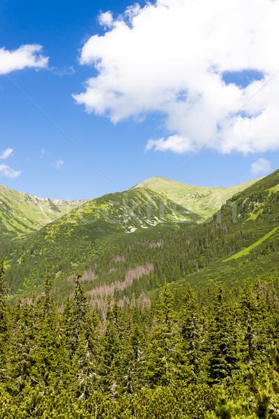 Vallei hoog Slowakije boom bos landschap Stockfoto © phbcz