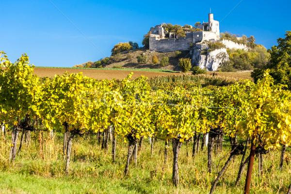 Romok kastély szőlőskert ősz alsó Ausztria Stock fotó © phbcz