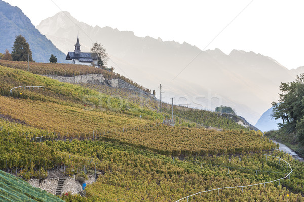 vineyards in Sion region, canton Valais, Switzerland Stock photo © phbcz