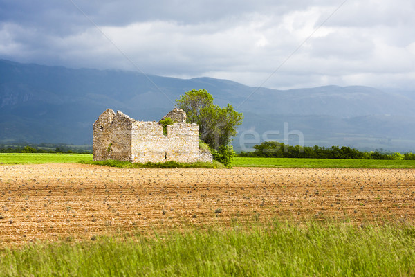field with a tree and ruin of house, Plateau de Valensole, Prove Stock photo © phbcz