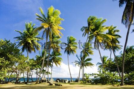 Maracas Bay, Trinidad Stock photo © phbcz