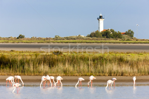 Phare pr oiseau Voyage architecture Flamingo Photo stock © phbcz