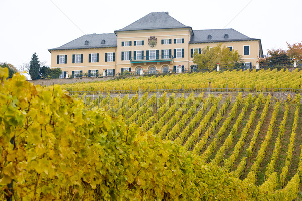 Johannisberg Castle with vineyard, Hessen, Germany Stock photo © phbcz
