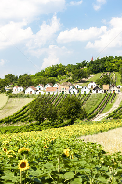 wine cellars with vineyards, Galgenberg, Lower Austria, Austria Stock photo © phbcz