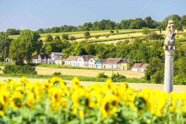 Bor napraforgó mező alsó Ausztria építészet Stock fotó © phbcz
