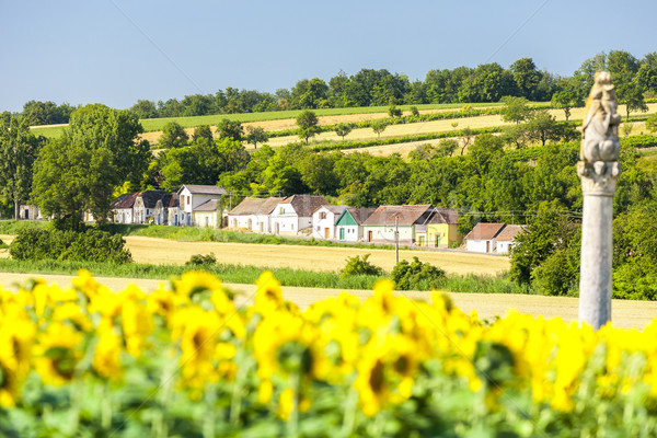 вино подсолнечника области снизить Австрия архитектура Сток-фото © phbcz