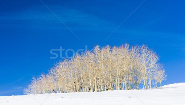 Zimą drzew Utah USA krajobraz śniegu Zdjęcia stock © phbcz