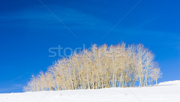Hiver arbres Utah USA paysage neige Photo stock © phbcz