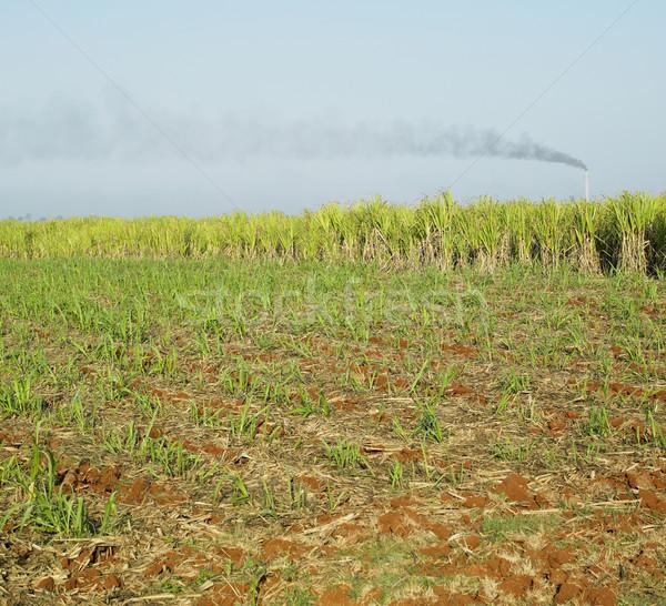 Canne domaine nature ferme laisse plantes Photo stock © phbcz