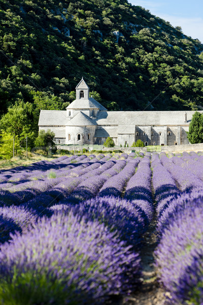 Senanque abbey with lavender field, Provence, France Stock photo © phbcz