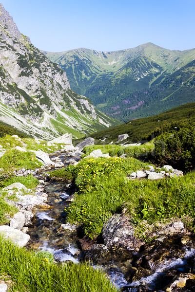 Vallei hoog Slowakije landschap Europa stream Stockfoto © phbcz