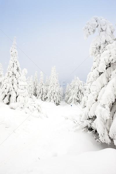 Inverno paisagem montanhas República Checa floresta neve Foto stock © phbcz