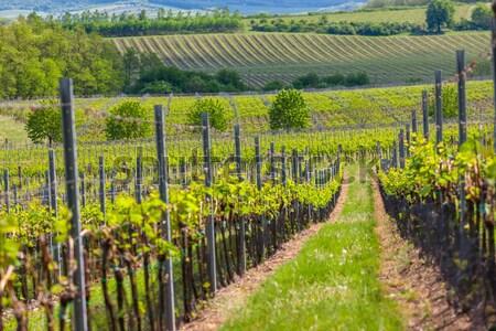 Ver baixar Áustria paisagem outono Foto stock © phbcz