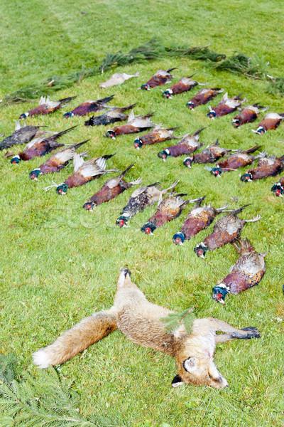 excludes of caught animals Stock photo © phbcz