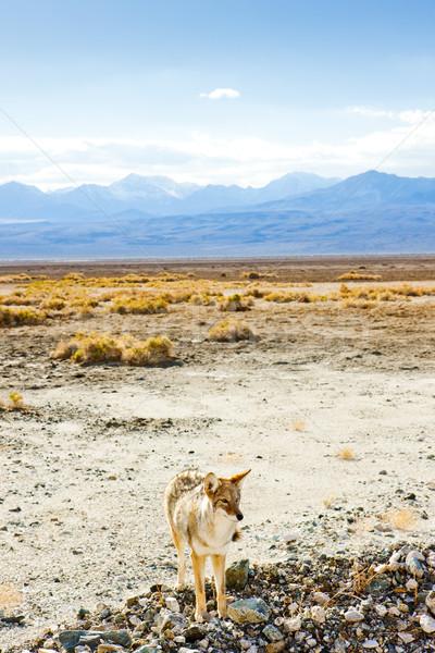 Mort vallée parc Californie USA paysage Photo stock © phbcz