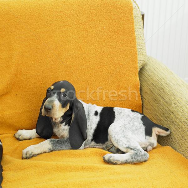 puppy Stock photo © phbcz
