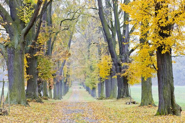 autumnal alley Stock photo © phbcz