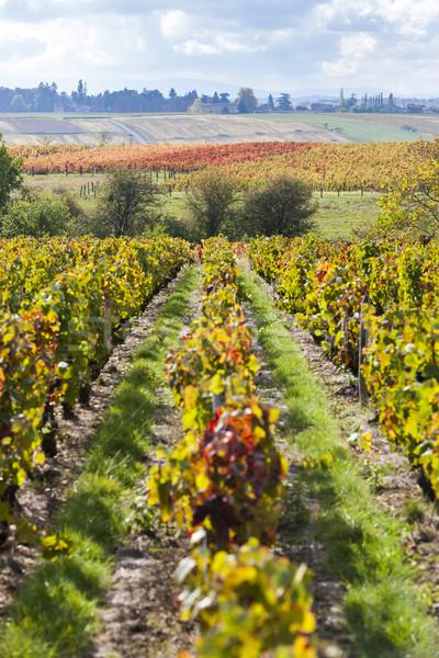 França paisagem outono planta europa videira Foto stock © phbcz