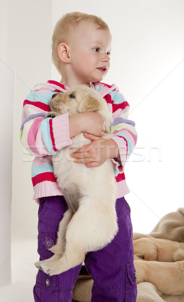 little girl playing with puppy of golden retriever Stock photo © phbcz