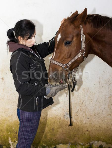 equestrian feeding the horse Stock photo © phbcz