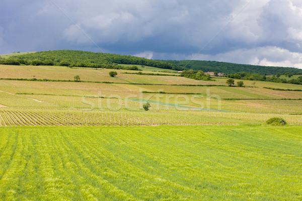 vineyards of C Stock photo © phbcz