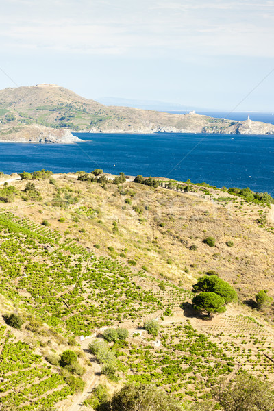 vineyard on Cote Vermeille and Cap Bear lighthouse, Languedoc-Ro Stock photo © phbcz