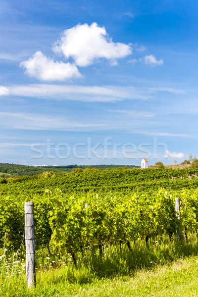 vineyard near Hnanice, Southern Moravia, Czech Republic Stock photo © phbcz