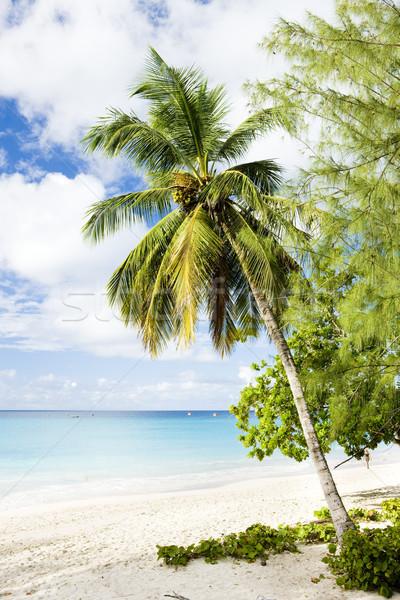 Empresa praia Barbados caribbean árvore paisagem Foto stock © phbcz