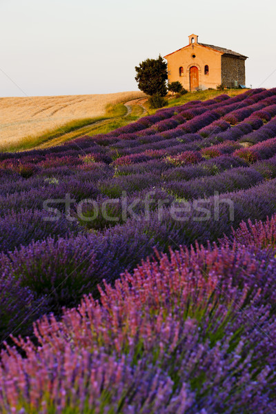 chapel with lavender and grain fields, Plateau de Valensole, Pro Stock photo © phbcz