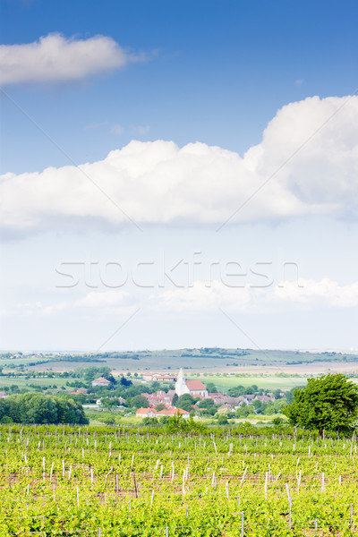 vineyard Nebenfuhr, Lower Austria, Austria and Hnanice village,  Stock photo © phbcz