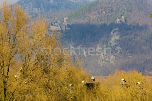 Zucht Zentrum Natur Bäume Vogel Reise Stock foto © phbcz